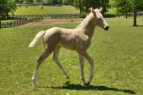 Honey's foal photo