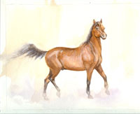 1st Prize - Original watercolor