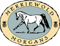 Merriewold Morgans