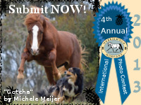 2013 Morgan Horse Photo Contest